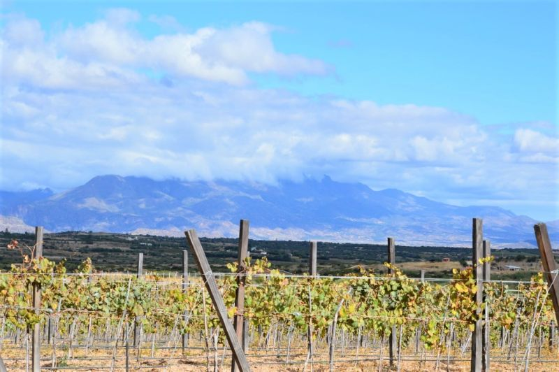 Tarija is the capital of Bolivian wine region